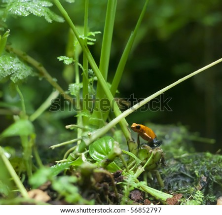 An orange frog - stock photo