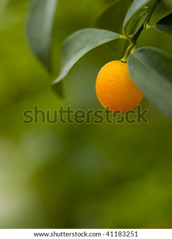 An orange hanging on a branch in the sun