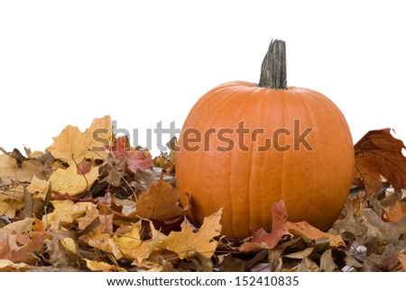 An orange pumpkin surrounded by fall leaves on a white background.