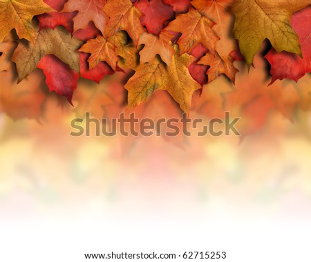 An orange, red fall background top border for the season. Leaves are piled up with faded white copyspace for your text. Can be used as a Halloween or Thanksgiving image too. - stock photo