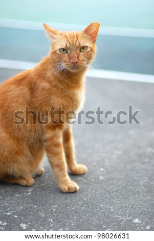 An orange stray cat is staring