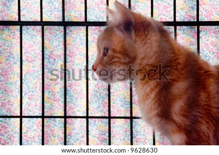 An orange striped kitten in a cage that is covered with pastel gingham cloth. - stock photo