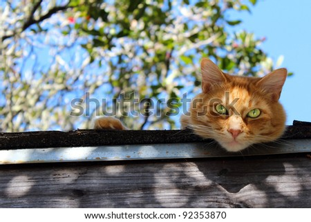 An orange tabby cat relaxing on a roof. - stock photo