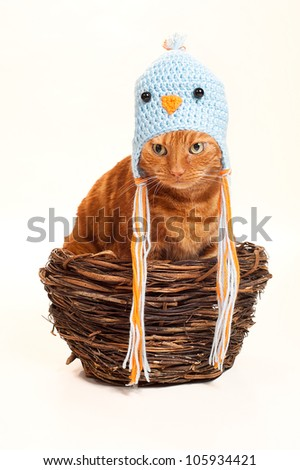 An orange Tabby cat sitting in a nest disguised as a bird. He is wearing a crocheted bird hat / costume. Shot in the studio and isolated on a white background. - stock photo