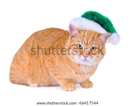 An orange tabby cat wearing a green Santa hat. - stock photo