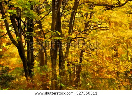 An original photograph of colorful trees in autumn transformed into a vivid illustration