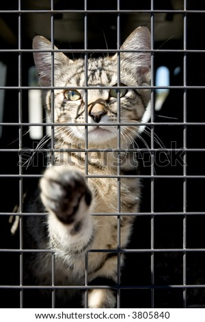 An orphaned kitten in a cage reaching out with a paw - stock photo