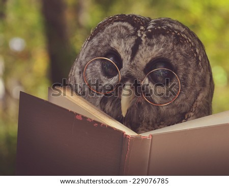 An owl animal with glasses is reading a book in the woods for an education or school concept. - stock photo
