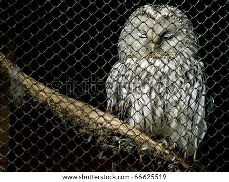 An owl behind bars - stock photo