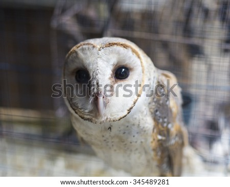 An owl is in the cage. - stock photo