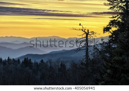 An owl sits and watches over the Smoky Mountains at sunset - stock photo