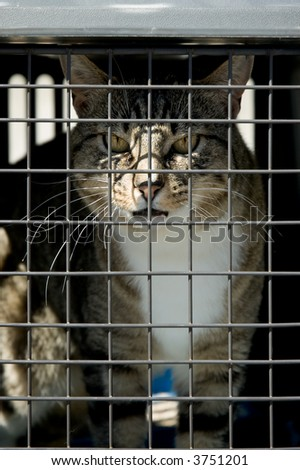 An unhappy cat locked in a cage - stock photo
