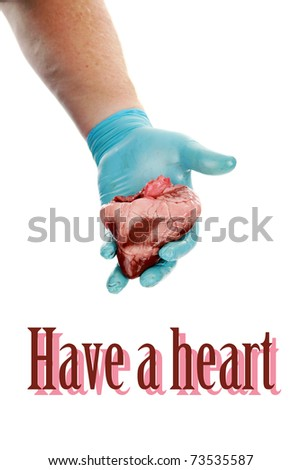an unidentifiable surgeon holds a heart in his hands.  isolated on white with room for your text great for Valentines Day, Medical and other uses - stock photo