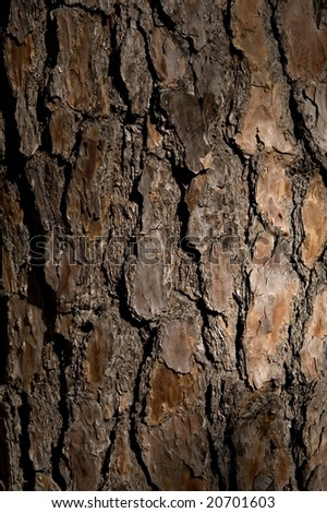 An up close image of tree bark - stock photo