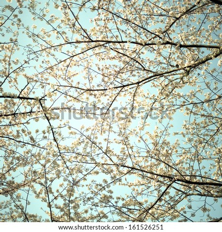 An upward view of the sky between branches. - stock photo
