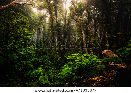 Anaga forest jungle trees
