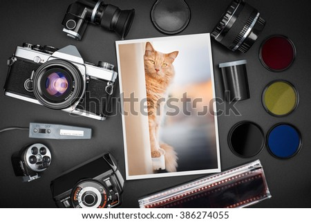 Analog SLR camera equipment around a printed photo of a ginger cat - stock photo