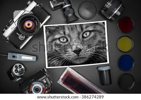 Analog SLR camera equipment around a printed photo of a tabby cat - stock photo