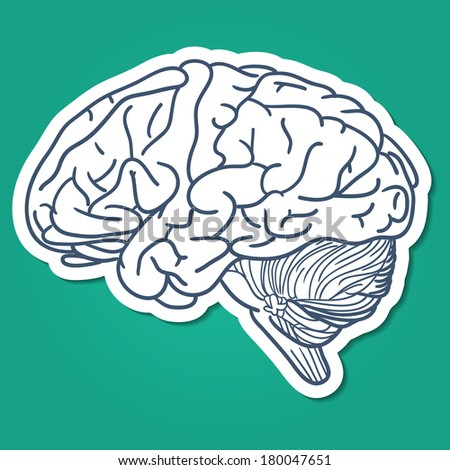 Anatomical brain human organ. Sketch sticker element for medical or health care design