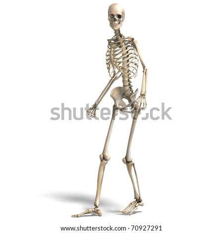 anatomical correct male skeleton. 3D rendering with clipping path and shadow over white - stock photo
