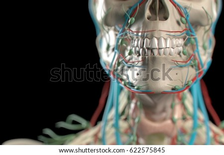 Anatomy models for medical students