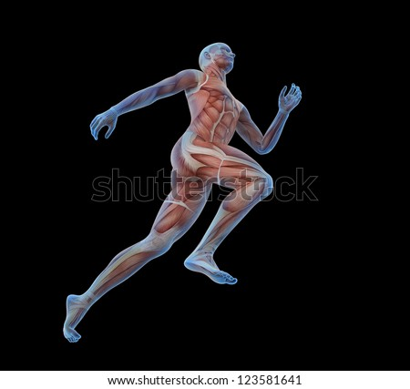 Anatomical illustration of a runner - stock photo