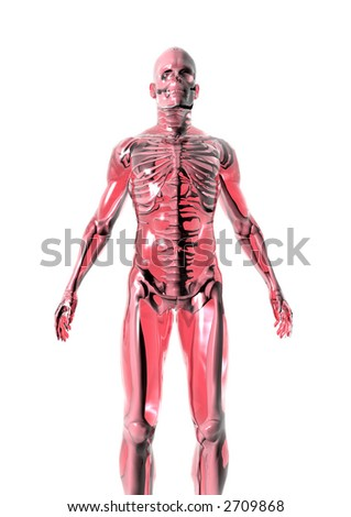 Anatomically correct 3D model of human body isolated on white background.