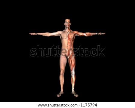 Anatomically correct medical model of the human body, muscular man. 3 D render, illustration.