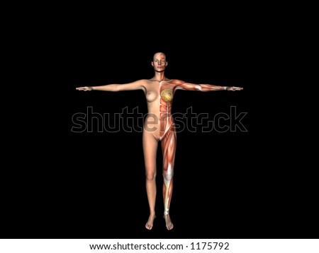 Anatomically correct medical model of the human body, woman. 3D render, illustration.