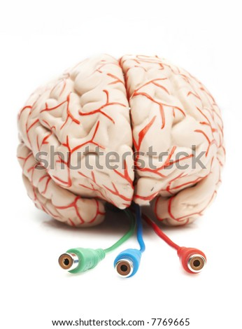 anatomically correct rubber model of the human brain, brain ready to be pluged - stock photo