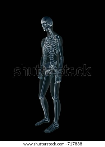 Anatomically correct Xray, x-ray of the human male body, man and woman. 3D render, illustration over black. View from right.  Different body parts can be requested via forum. - stock photo