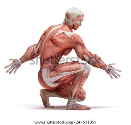 anatomy - stock photo