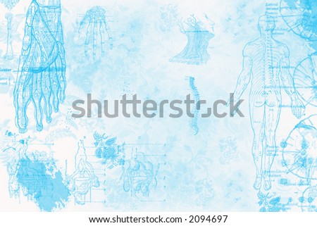 anatomy background - stock photo