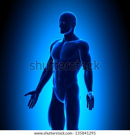 Anatomy Body - Iso View - Blue concept - stock photo