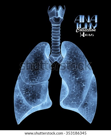 Anatomy collection - X-rays of lungs. Watercolor isolated organ   - stock photo