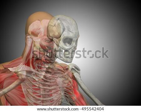 Anatomy Concept 3 D Illustration Human Man Stock Illustration