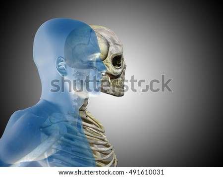 Anatomy concept or conceptual 3D illustration of human man medical or health body chest, head gray bright background for medical, fitness, medicine, bone, care, hurt, osteoporosis, arthritis or body