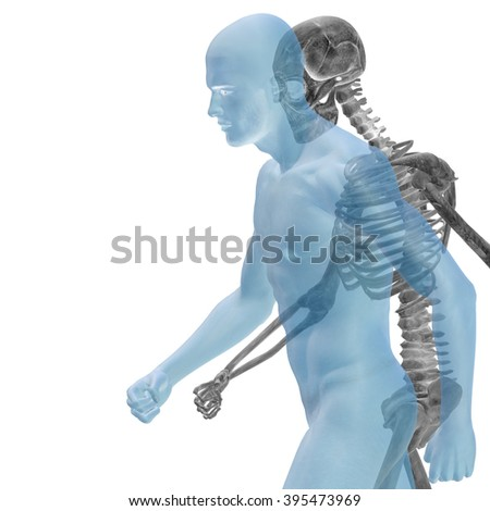Anatomy concept or conceptual human man body chest, head blue bright background, metaphor to medical, science, health, male, biology, medicine, bone, anatomical, muscular, system, face, cranium, spine - stock photo