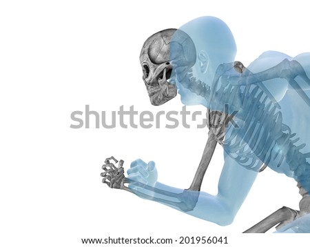 Anatomy concept or conceptual human man body chest,head isolated on background, metaphor to medical, science, health, male, biology, medicine, bone, anatomical, muscular, system, face, cranium, spine
