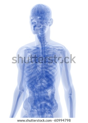 anatomy in blue - stock photo