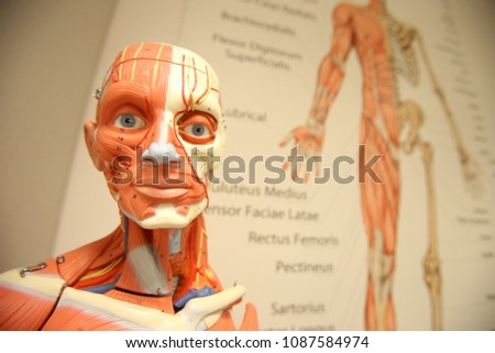 Anatomy Branch Biology Concerned Study Structure Stock Photo Edit
