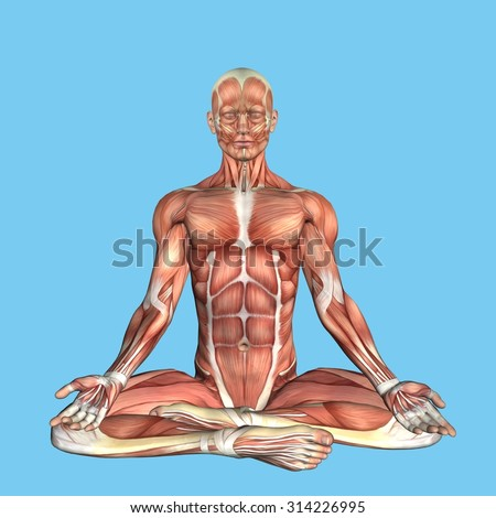 Anatomy Meditative Pose: Featuring male torso major muscular groups including the sternocostal, rectus abdominis, pectoralis major, serratus anterior and latissimus dorsi.  - stock photo