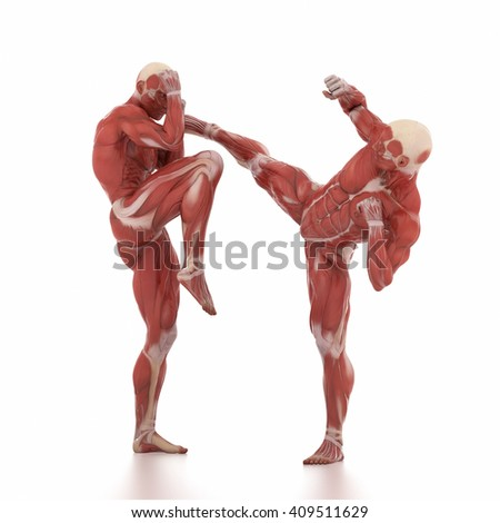 anatomy muscle map white isolated anatomy stock illustration, Muscles