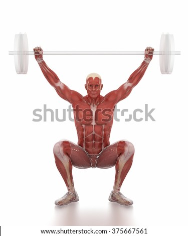 Anatomy muscle map white isolated - weightlifting warm up - stock photo