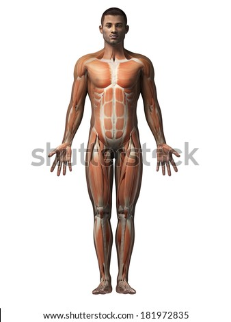 anatomy of an african american man - muscles