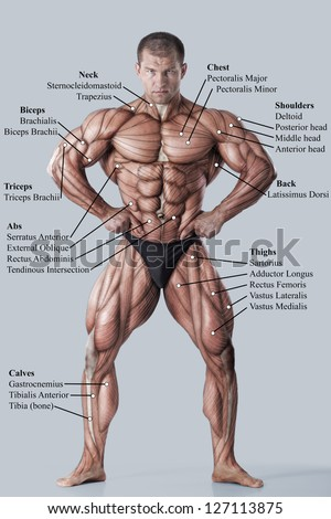 Anatomy of male muscular system - anterior view - full body - stock photo