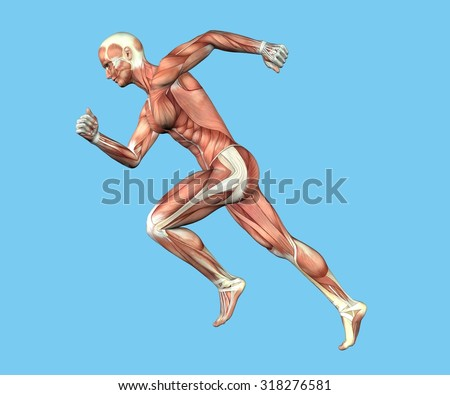 Anatomy of Man in Running Sprint Motion: Featuring coronal suture, maxilla and zygomatic bone, temporalis muscle, masseter muscle, orbicularis oculi muscle and zygomaticus major muscle. - stock photo