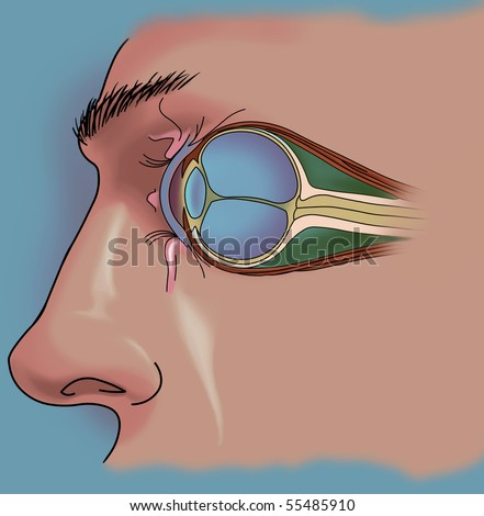 Anatomy of the Eye - Cut-away View - stock photo