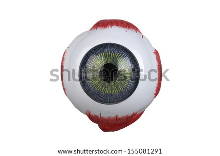 Anatomy of the eye model - stock photo