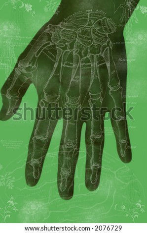 anatomy of the hand - stock photo